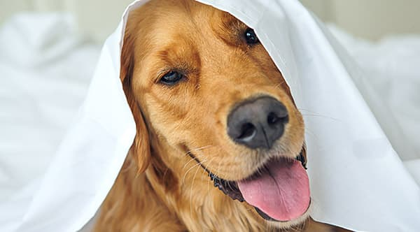 Dog with a towel on it's head