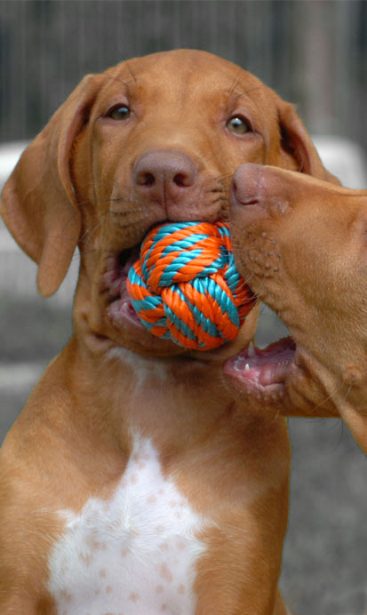Dogs with a ball