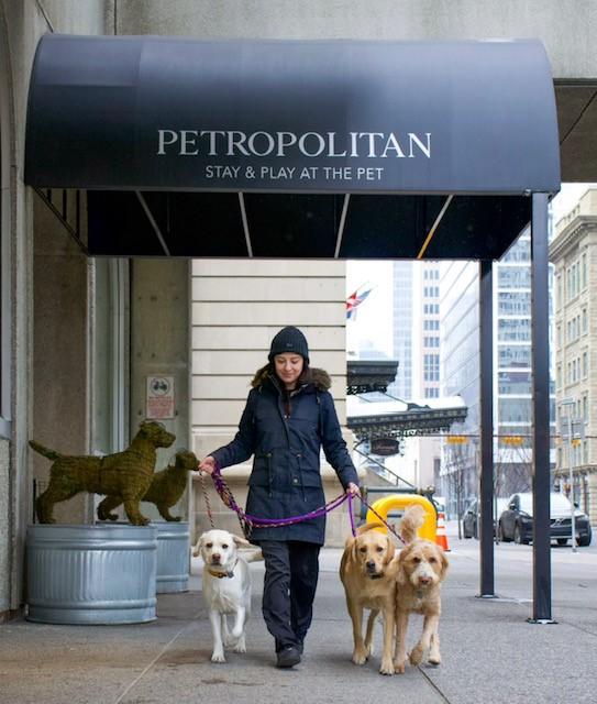 Kaitlyn walking dogs