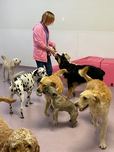 Siobhan in Group of Dogs